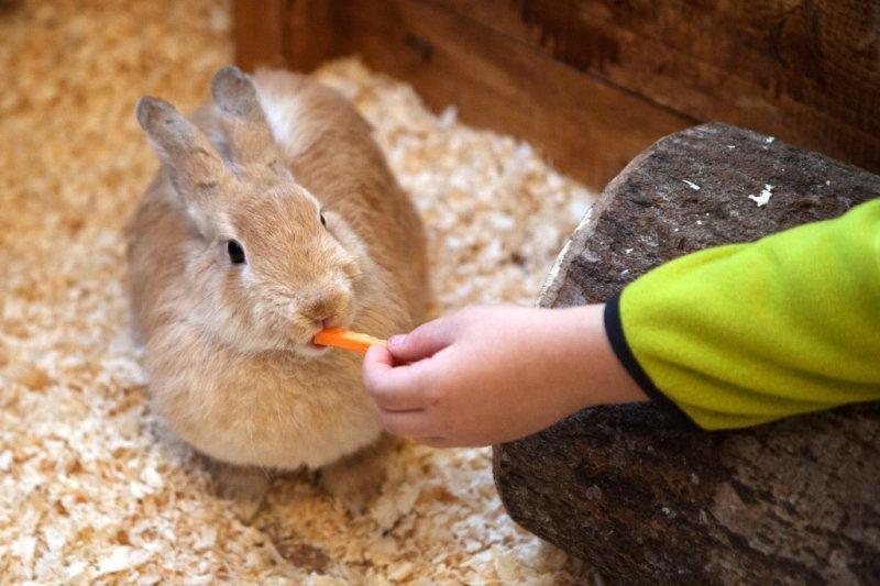 картинки человек кормит животных значение